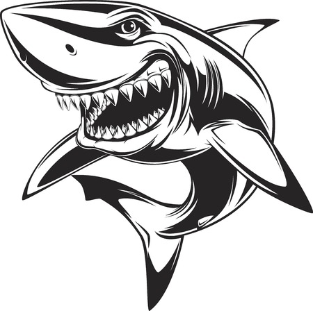 Illustration for Vector illustration: toothy white shark - Royalty Free Image