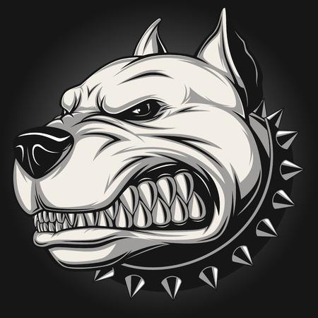 Illustrazione per Vector illustration Angry pitbull mascot head, on a white background - Immagini Royalty Free