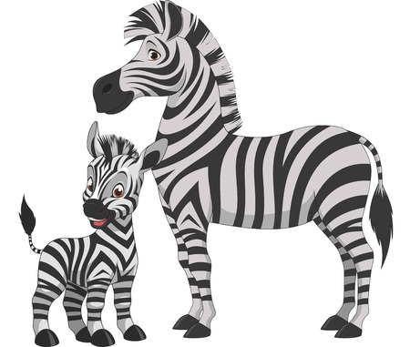 Illustration for Vector illustration, adult zebra and young zebra, on a white background - Royalty Free Image