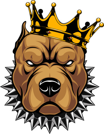 Illustrazione per Vector illustration of a pit bull dog head in a golden crown, king, on a white background.  - Immagini Royalty Free