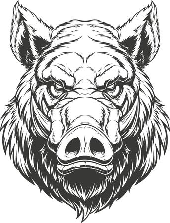 Illustration pour Vector illustration, the head of a ferocious wild boar, on a white background. - image libre de droit
