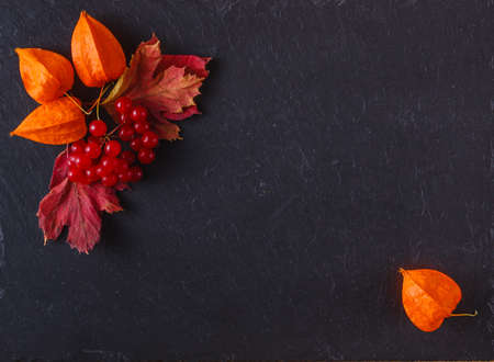 Photo for Red viburnum on black slate background with place to text - Royalty Free Image