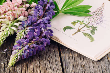 Photo for Botanical illustration. Medical plants. Old open book herbalist - Royalty Free Image