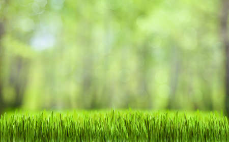 Photo pour spring green abstract forest natural background - image libre de droit