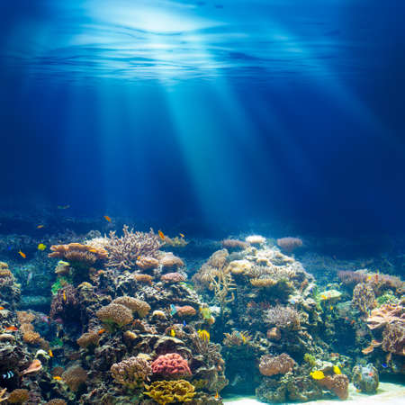 Photo pour Sea or ocean underwater coral reef snorkeling or diving background - image libre de droit