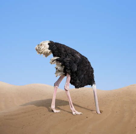 Photo pour scared ostrich burying its head in sand - image libre de droit