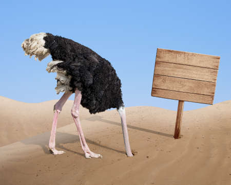 Photo pour scared ostrich burying head in sand near standing blank wooden signboard - image libre de droit