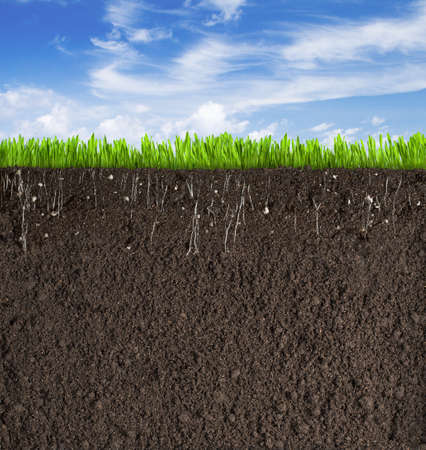 Photo for Soil or dirt section with grass under sky - Royalty Free Image