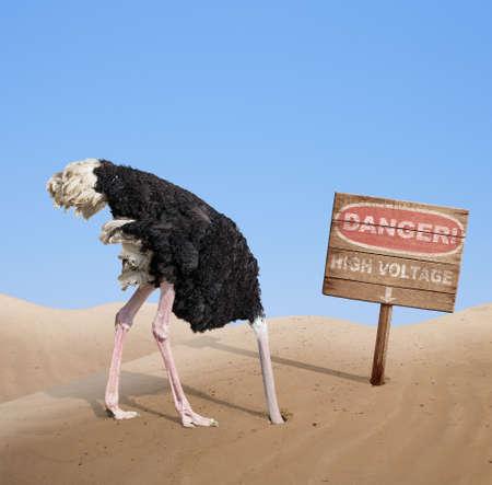 Photo pour scared ostrich burying head in sand under danger sign - image libre de droit