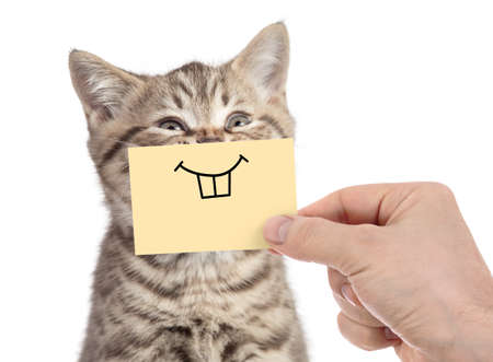 Foto de happy cat with funny smile on cardboard isolated on white - Imagen libre de derechos