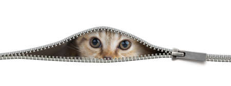 Foto de Funny cat in open zipper hole isolated - Imagen libre de derechos