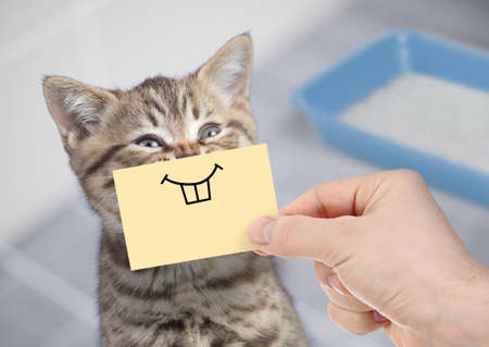 Foto de funny cat with smile on cardboard sitting near litter box - Imagen libre de derechos