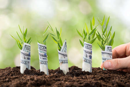 Photo for Close-up Of Person's Hand Planting Saplings Covered With American Dollars - Royalty Free Image