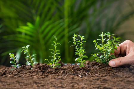 Photo for Closeup of man's hand planting tree on ground - Royalty Free Image