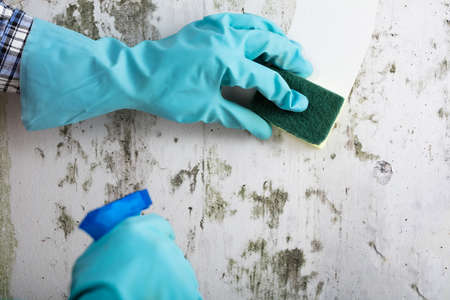 Photo pour Housekeeper's Hand With Glove Cleaning Mold From Wall With Sponge And Spray Bottle - image libre de droit