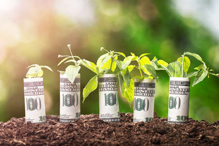 Photo pour Saplings Covered With Rolled Up American Banknotes On Soil - image libre de droit