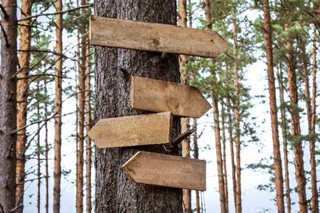 Photo for Blank wooden directional signs on tree trunk in forest - Royalty Free Image