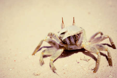 Photo for Crab on a sandy beach close up as a natural background - Royalty Free Image