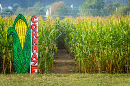 Foto de A cornmaze in this cornfield in rural Central New Jersey. - Imagen libre de derechos