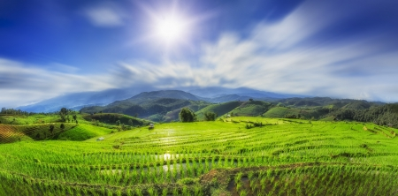 Photo pour Lush green rice field and sunset, In Asia - image libre de droit