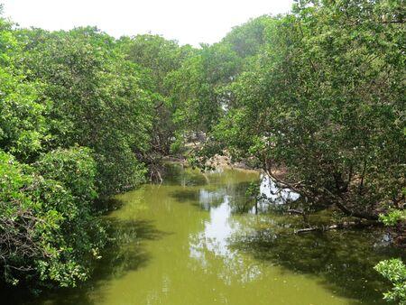 Photo pour green water - image libre de droit