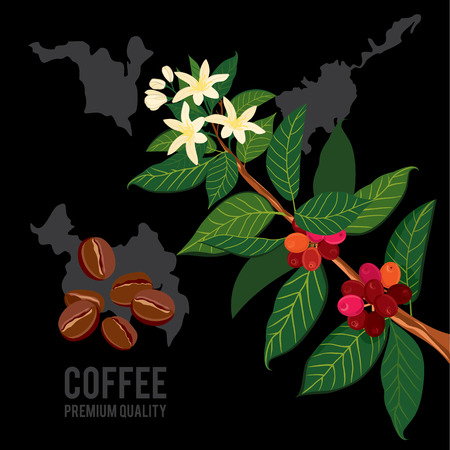 Illustration for Coffee branch on the background of the map. Plant with leaf, flowers, berry, fruit, seed. Ripe coffee. - Royalty Free Image