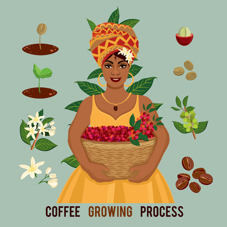 Ilustración de Plant growing from seed to coffee tree, life cycle of a plant. Coffee farmer with a basket of coffee. Sprout, plant, tree grow bean farm icon. - Imagen libre de derechos