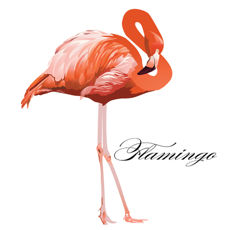Ilustración de Flamingo tropical exotic coral bird Vector isolated Illustration. - Imagen libre de derechos