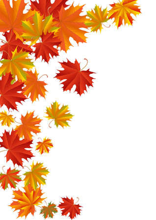 Illustration for Illustration of autumn maple leaves in various colors isolated - Royalty Free Image