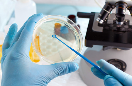 Foto de microbiologist hand cultivating a petri dish whit inoculation loops, beside a microscope and at background tubes and tools of laboratory / lab technician hand planting a petri dish - Imagen libre de derechos