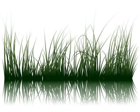Illustration pour Vector grass silhouettes background with reflection in water. All objects are separated. - image libre de droit