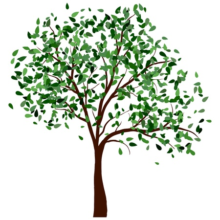 Summer tree with green leaves.illustration. mural