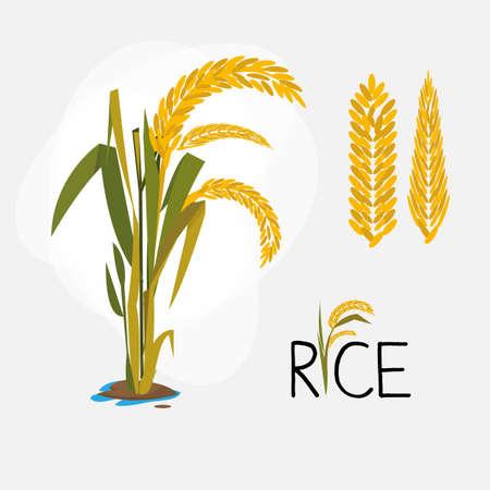 Ilustración de rice set. letter - vector illustration - Imagen libre de derechos