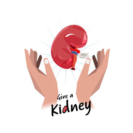 Ilustración de Hand with kidney. Hope for organ donation concept - vector illustration - Imagen libre de derechos
