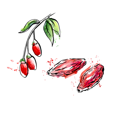 Illustration for Vector illustration of super food Goji berry. Organic healthy dietary supplement. Black outlines and bright watercolor stains, splashes and drips. - Royalty Free Image
