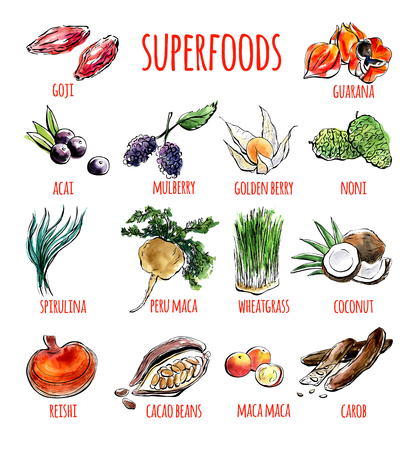 Ilustración de Big set of vector doodle illustrations of the most popular super foods. Collection of hand drawn fruits, plants and berries with black outline and watercolor stains isolated on white background. - Imagen libre de derechos