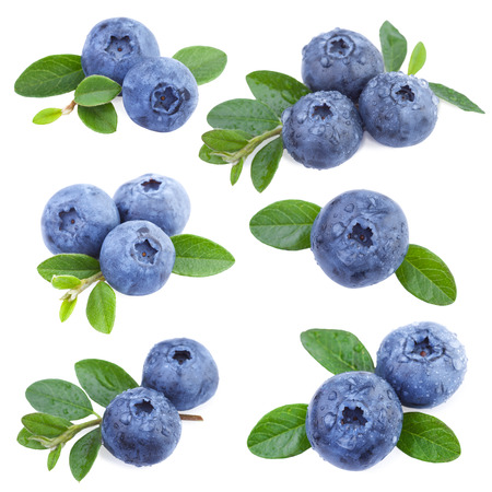 Photo for Blueberries Collection - Royalty Free Image