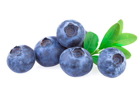 Photo for Blueberries isolated - Royalty Free Image