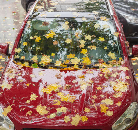 Wet fallen leaves of maple on the hood, windshield and roof of red car during rain