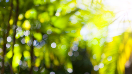 Photo for Tropical shiny summer palm green leaves blurred background. Copy space - Royalty Free Image