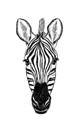 Illustration pour Hand drawn illustration of zebra isolated on white background - image libre de droit