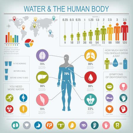 Ilustración de Water and human body infographic. Useful information about water. Concept of healthy lifestyle. Drink more water. - Imagen libre de derechos