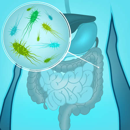 Illustration pour Beautiful vector illustration of bacterial flora in human internal organs. Abstract medicine concept. Useful for poster, indographics, placard, leaflet, brochure, print, book and ad graphic design. - image libre de droit