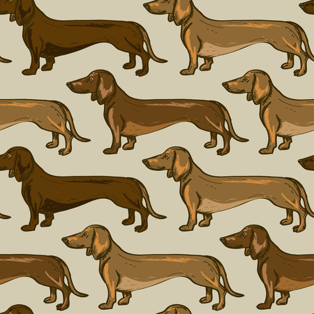 Illustration for Seamless pattern of beige brown Dachshund dogs  - Royalty Free Image