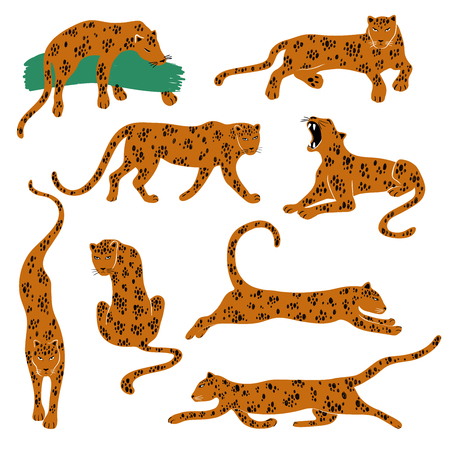 Illustrazione per Wild set of leopard. Isolated Leopard icons in action: standing, sitting, running, jumping, lying, growling. - Immagini Royalty Free