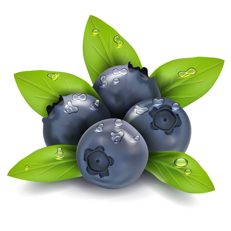 Illustration for Bilberry vector - Royalty Free Image