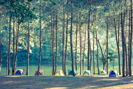 Camping and tent under the pine forest Vintage color style