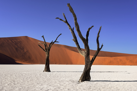 Photo for Dead Acacia Trees and Red Dunes of Deadvlei in Namib-Naukluft Park, Namibia - Royalty Free Image