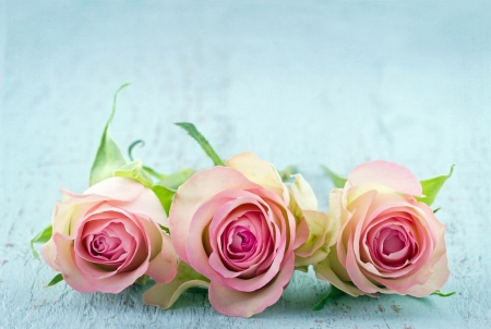 Photo pour Three pink roses on light blue wooden shabby chic background with copy space - image libre de droit
