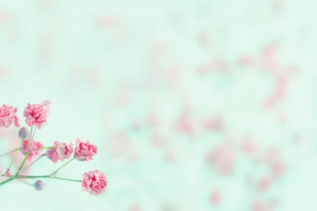 Foto für Pink baby's breath flowers on light blue pastel shabby chic textured background and copy space, soft and delicate floral pattern - Lizenzfreies Bild